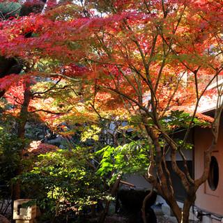 窓の外に広がる美しい日本庭園で日本の四季を―。