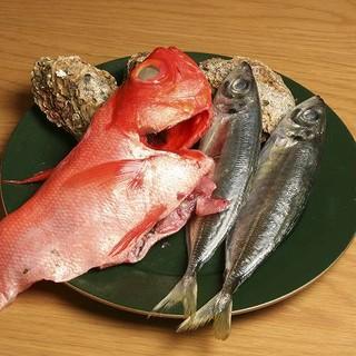 築地直送の新鮮の魚!