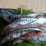 41644139 - 秋刀魚のお刺身