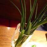 但馬地鶏 炭のあかり 北新地 - ☆葱をアテにポリポリお塩で楽しめます!(^^)!☆