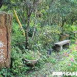 香文木 - 散歩道