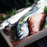 魚菜酒蔵 だいがく -