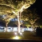 炭火やきとり とっ鳥屋 - 鳥取駅前