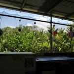 パーラー ぱいぬ島 - 店内からの眺め
