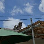 そば処 竹の子 - 屋根の上のシーサー
