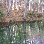 4212931 - 美人林はブナの二次林です。