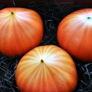 秋の味覚続々入荷中!旬の美味しさをたっぷりご用意しました!