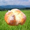 ぱん工房 花花 - 料理写真:塩バターパン