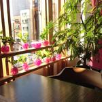 常春 - 西の窓から日差し