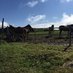 民宿 フィールドノート - 荒川高原を通って遠野方面へ!