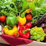 ビストロ カキヤ - 契約農家から仕入れた新鮮な有機野菜を使用