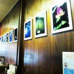平岡珈琲店 - 店内 壁のギャラリー