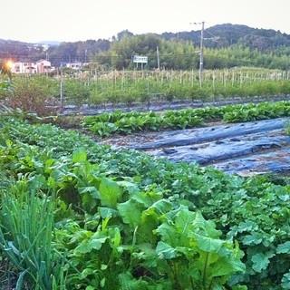 季節のお野菜は店主の父親が作っています。