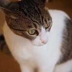 サイドロップ - 看板猫のアメちゃん