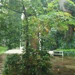カカオサンパカ カフェ - 中庭が見えます