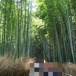 老松 - おまけ④ 竹林の小径2♪