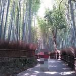 老松 - おまけ③ 竹林の小径1♪