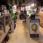 ブルーブルーカフェ - 天井から藻(꒦ິ⌑꒦ີ)