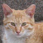 ラ・フラム - 野良猫