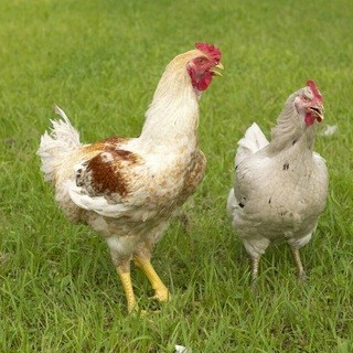 店主が厳選した新鮮な九州産の若鶏をお愉しみください。