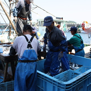 水揚げ直後のお魚をその場で買い付けてます!