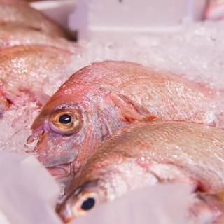 平塚魚市場直送の鮮魚たち