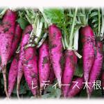 天現寺ガーデン - レディース大根 三浦野菜