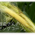 天現寺ガーデン - ヤングコーン 三浦野菜