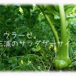 天現寺ガーデン - ミウラーゼ 三浦野菜