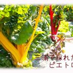 天現寺ガーデン - ピエトロ 三浦野菜