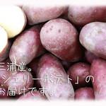 天現寺ガーデン - シェリーポテト 三浦野菜