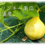 天現寺ガーデン - コリンキー南瓜 三浦野菜