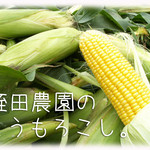 天現寺ガーデン - とうもろこし 三浦野菜