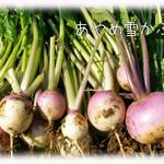 天現寺ガーデン - あやめ雪かぶ 三浦野菜