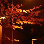フクサコ - 毎年秋は、店内枝ものは、本物の紅葉!