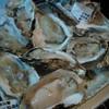 鯉城 - 料理写真:生牡蠣