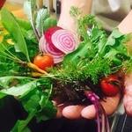 gurumi - 料理写真:契約農家から直接仕入れている野菜たちです