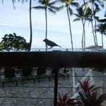 DUKE'S WAIKIKI - 鳥が遊びに来ます。