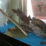 いちばん - 大きな水槽には、元気な魚たちがいっぱい