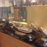43676849 - 水槽貝類が。