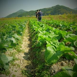 近隣の農家さんから元気な野菜を仕入れています。