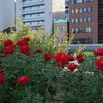 Kitahamaretoro - 薔薇園から見える北浜レトロ
