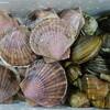 オホーツク活魚 - 料理写真:2015.11 ホタテ貝、北寄貝、つぶ貝の詰め合わせ♪