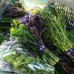 かん太村 - 料理写真:大人気サラダ野菜
