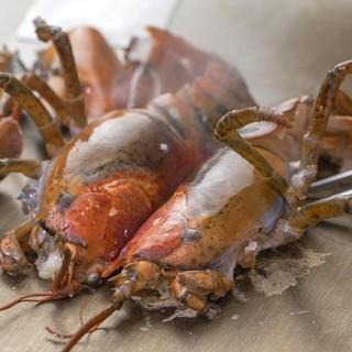 【超新鮮】相場半額以下の活オマール海老や厚岸産牡蠣まるえもん
