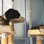 猫見家 - クリリンとポコとアイ