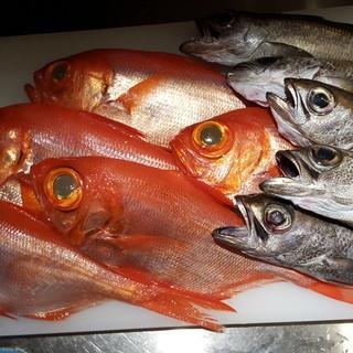 和歌山勝浦・新潟糸魚川・福井等、全国の漁港直送の新鮮な魚