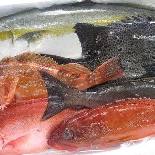 活け〆天然鮮魚のお造り!!