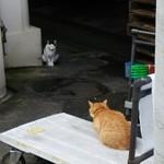 第二漁村 浜焼センター あぶりや - 市場の猫は美味い魚で毛並みがいいですな!