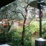 サザ コーヒー 本店 - ガーデンテラスの木漏れ日がステキです!
